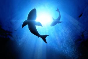 Ракът не убива акулите