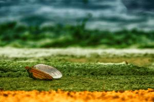 В какво се крие лечебната сила на водораслите